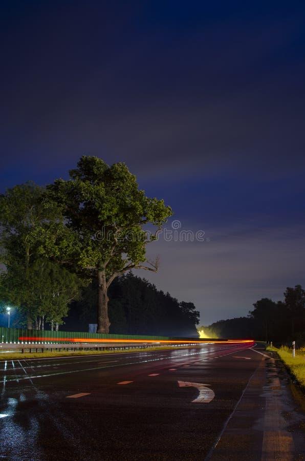 Träd på huvudvägen royaltyfria bilder