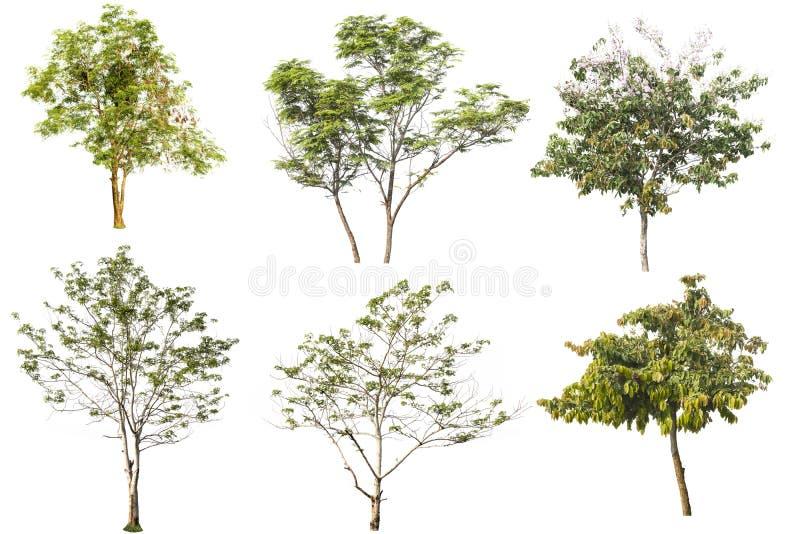 Träd på isolerat royaltyfri fotografi