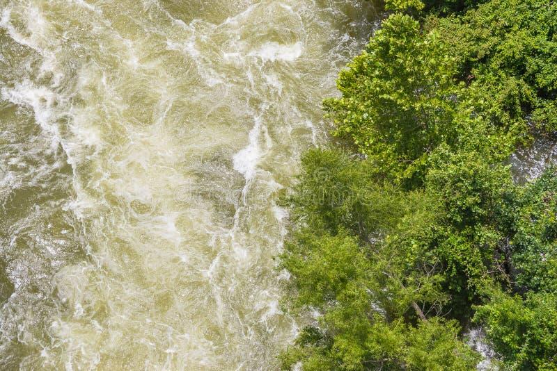 Träd på kanten av en våldsam vattenfrigörare royaltyfri bild