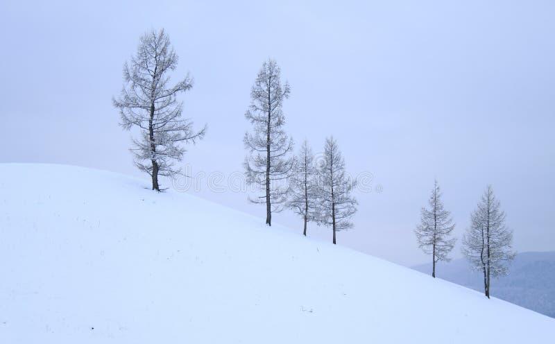 Träd på kullen, vinter arkivbilder