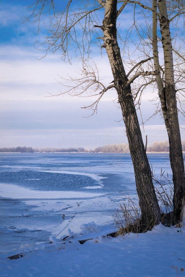 Träd på kusten av en isbunden djupfryst flod royaltyfria foton