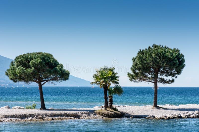 Träd på Lago di Garda Lakefront arkivfoto
