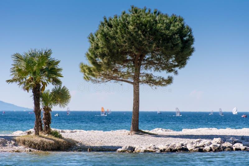 Träd på Lago di Garda Lakefront royaltyfria foton