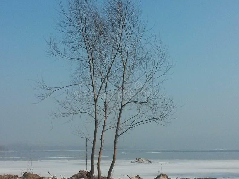Träd på Lucy& x27; s-kabin royaltyfria foton