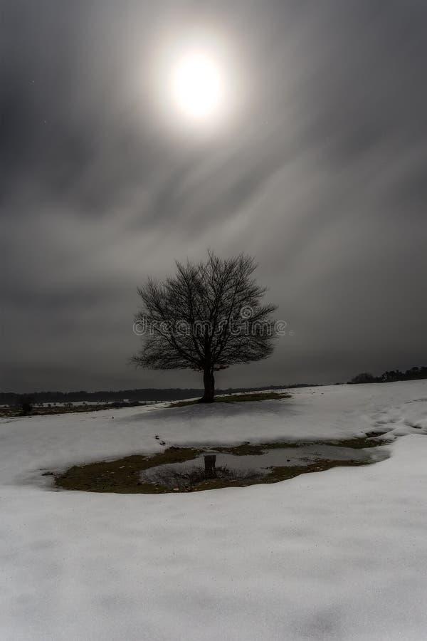 Träd på månsken royaltyfri foto