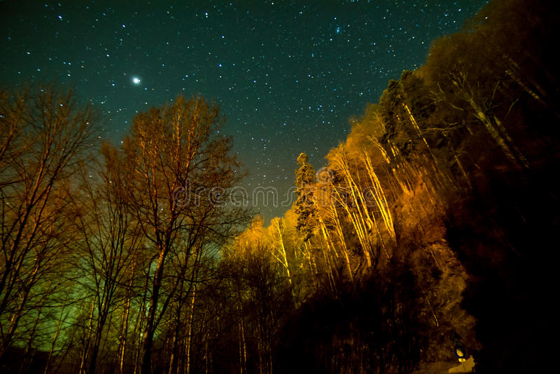 Träd på natten med stjärnor royaltyfri foto