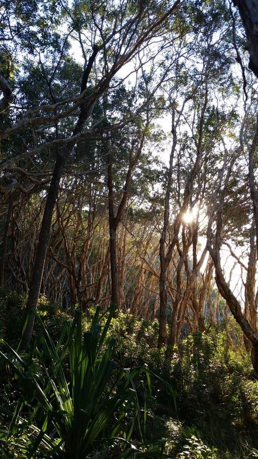 Träd på noosanationalparken arkivfoton