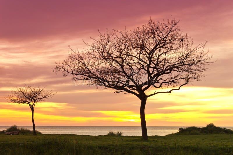 Träd på soluppgång arkivbilder