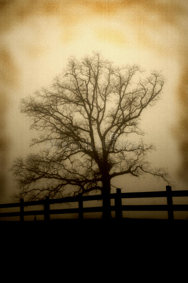 Träd på staketlinjen antik blick royaltyfri bild