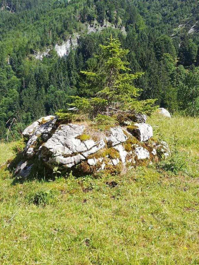 Träd på stenen royaltyfri foto