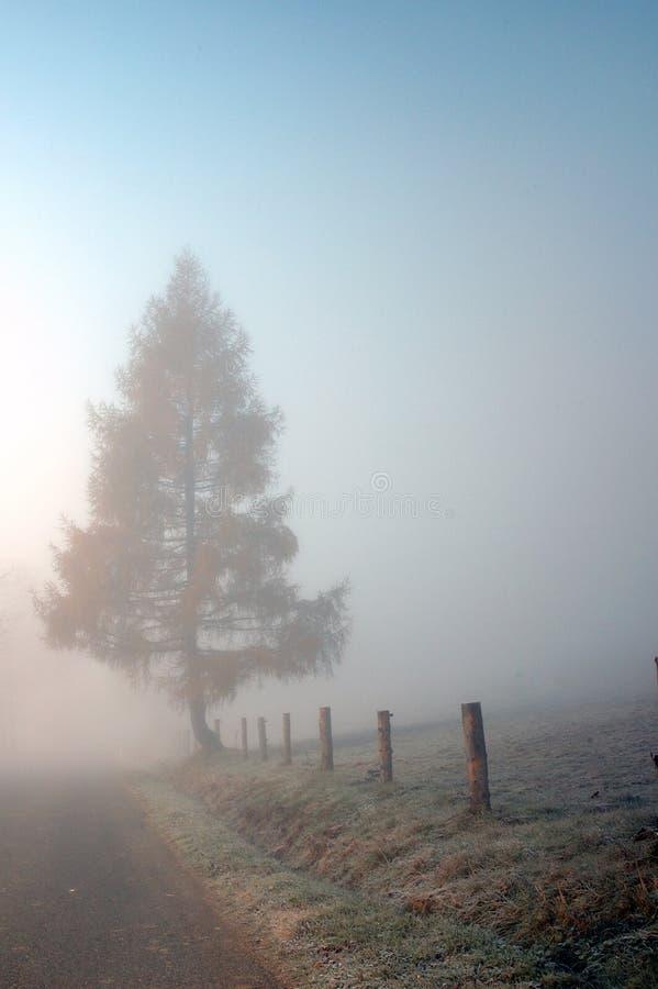 Träd på vägen i misten royaltyfri foto