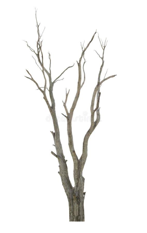 Träd på vit bakgrund arkivbild