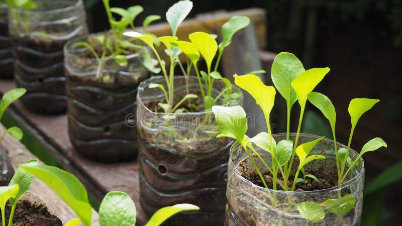 Träd planteras i återanvända plast- flaskor Planterat i en flaska plast- återanvänder royaltyfria bilder