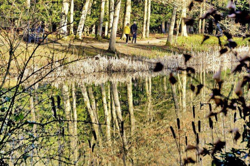 Träd reflekterade i det Kina dammet på Wallington Hall royaltyfri fotografi