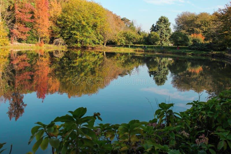 träd reflekterade på vattenyttersida royaltyfri fotografi