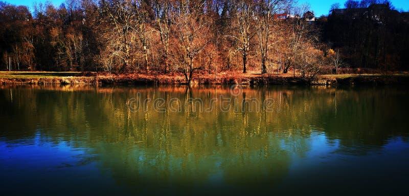 Träd reflekterar arkivbild