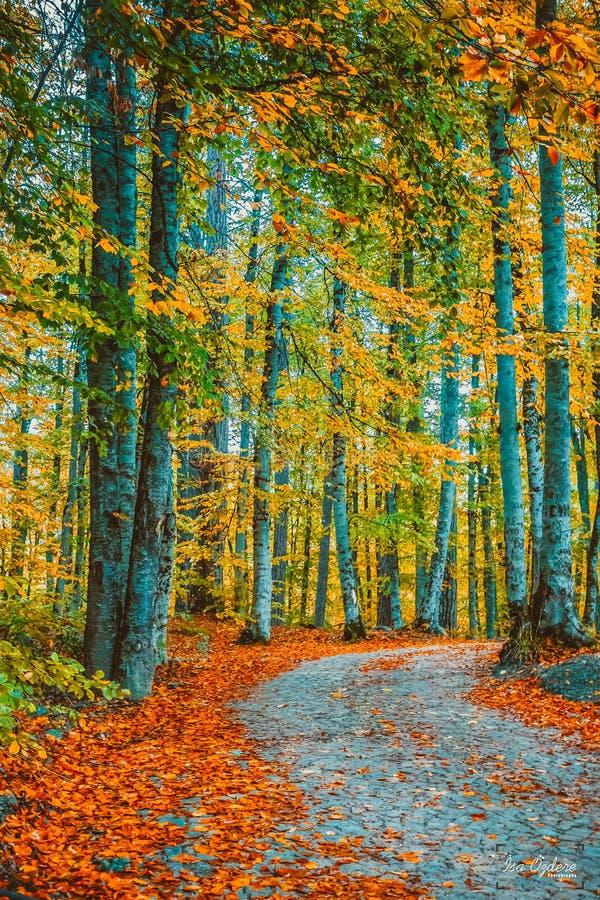 träd runt om den lilla vägen och torkar sidor på jordning arkivbilder