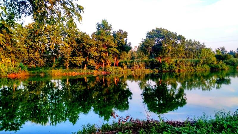 Träd runt om sjön royaltyfria bilder