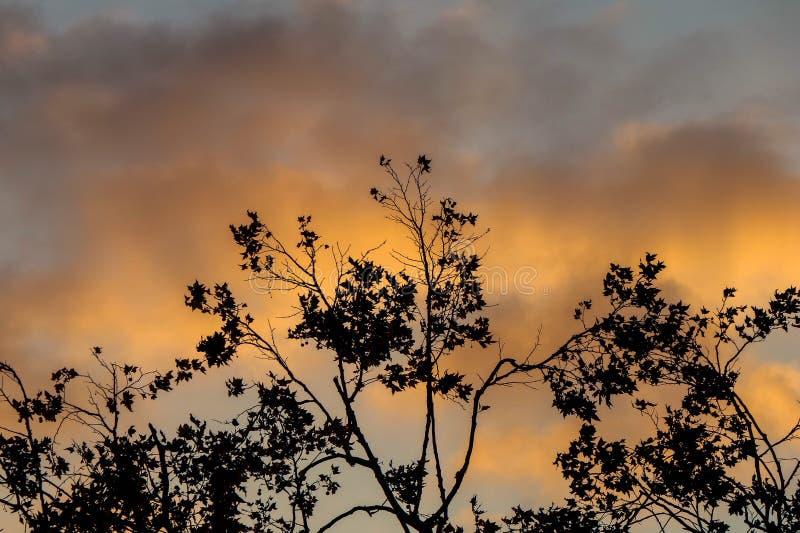 Träd Silhouetted mot det solbelysta molnet royaltyfria foton