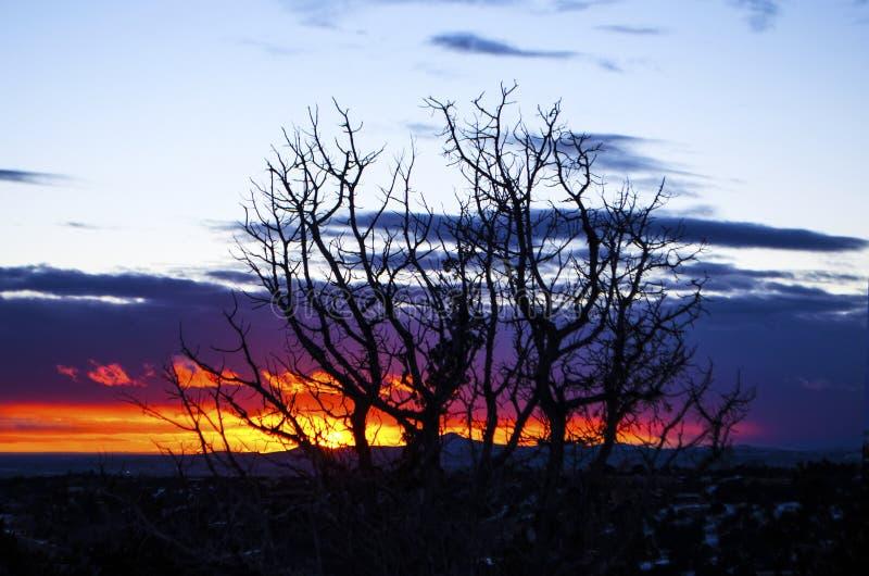 Träd silhouetted mot en sydvästsolnedgång royaltyfria bilder