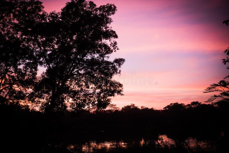 Träd silhouetted mot solnedgånghimmel på skymning Den verkliga fotografiska bilden förenklade litet för att producera en magisk f royaltyfri bild