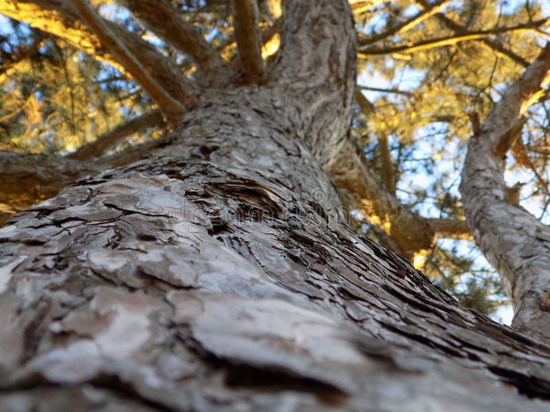 Träd sol, makro som är härlig, natur, royaltyfria foton