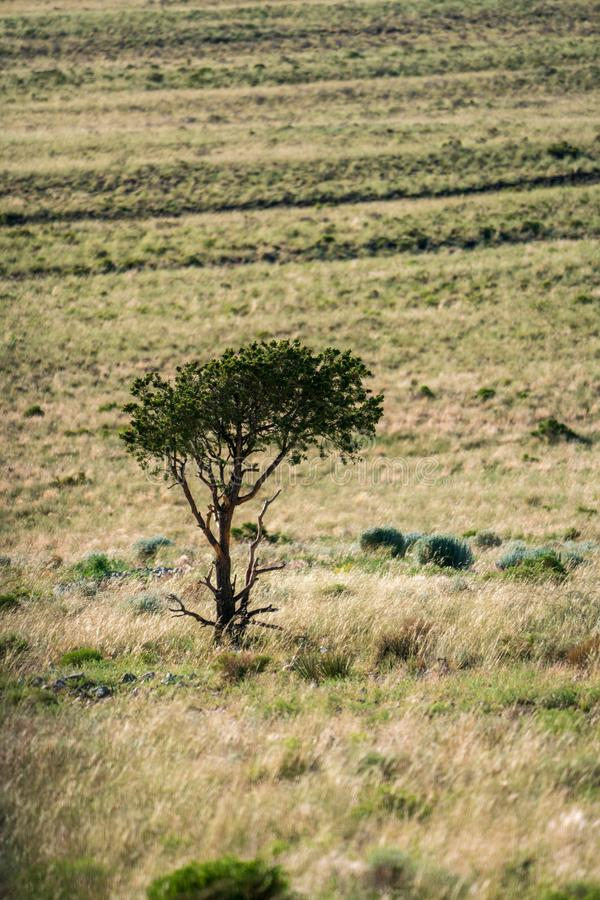 Träd som är främst av stor nationalpark för sanddyn i Colorado royaltyfria foton
