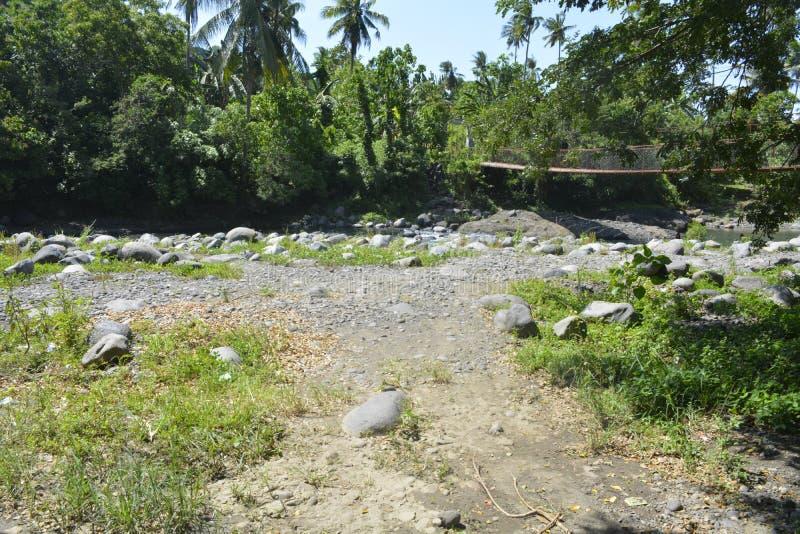 Träd som är fullvuxna på den Ruparan floden, Digos stad, Davao del Sur, Filippinerna arkivfoto