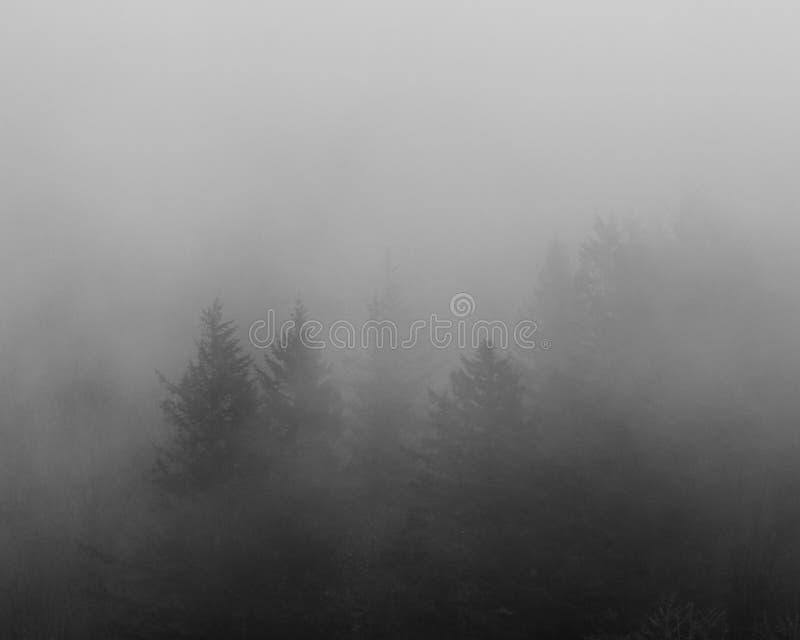 Träd som döljas i misten arkivfoto