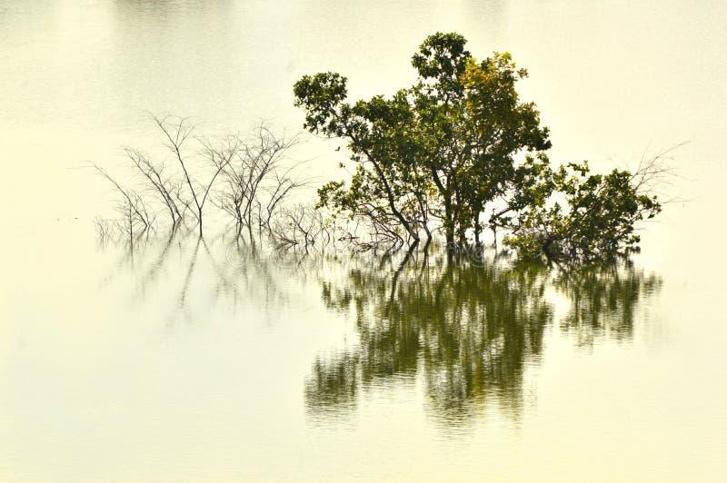 Träd som drunknas i sjövatten royaltyfria bilder