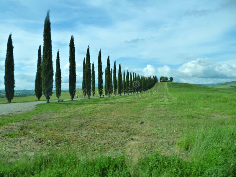 Träd som fodrar en körbana i Tuscany Italien royaltyfri foto