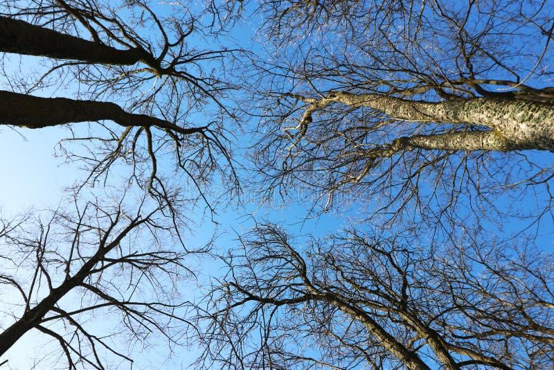 Träd som fotograferas i vinter arkivbilder