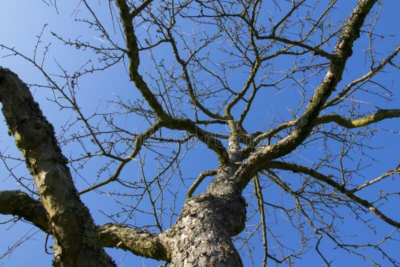Träd som fotograferas mot himlen arkivbild