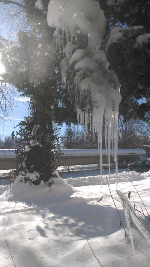 Träd som göras av is arkivfoto
