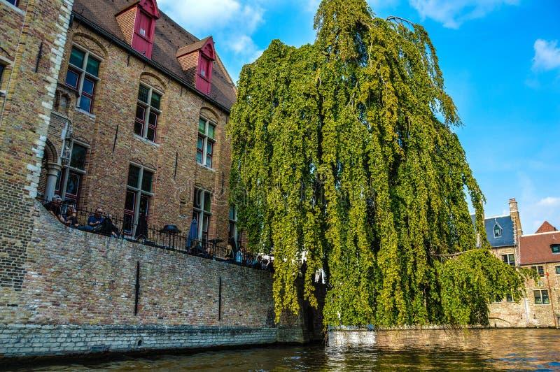 Träd som hänger över en kanal i Bruges, Belgien royaltyfri foto