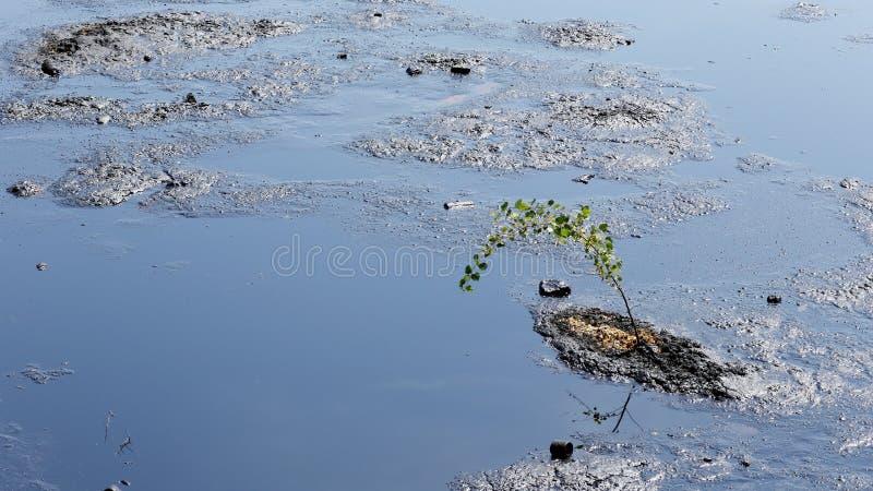 Träd som hotas av olje- och giftliga vikter, kemikalieer och olja royaltyfria foton