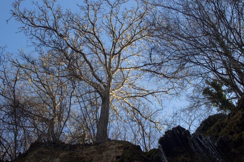 Träd som lyses bakifrån från solljus över ett vattenfall Mot den blå himlen fotografering för bildbyråer