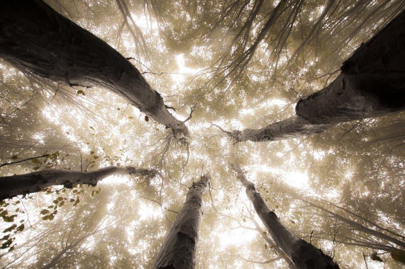 Träd som når upp i förtrollad skog i höst fotografering för bildbyråer