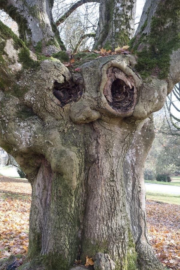 Träd som personifieras med framsidan royaltyfria bilder