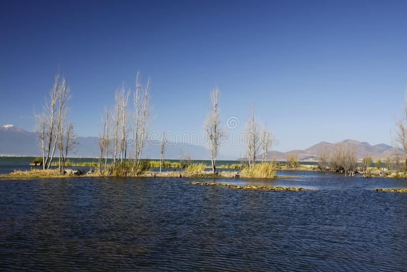 Träd som planteras i sjön i våtmark, parkerar royaltyfria foton