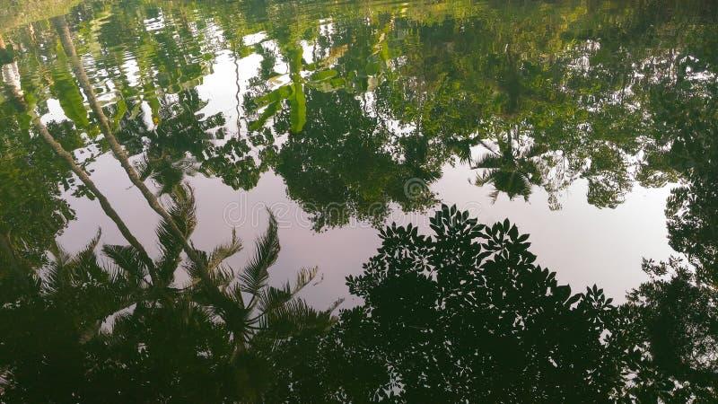 Träd som reflekterar på water arkivbilder