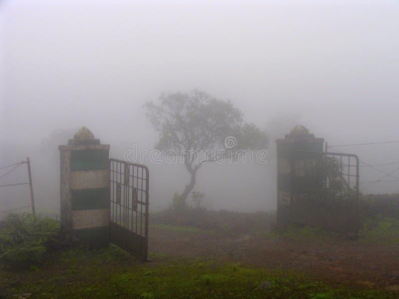 Träd som ses till och med dimma arkivfoton