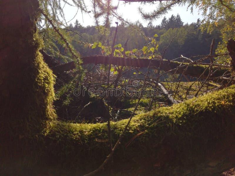 Träd som täckas i mossa royaltyfria foton