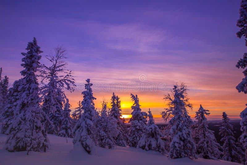 Träd som täckas med rimfrost och insnöade vinterberg arkivbilder