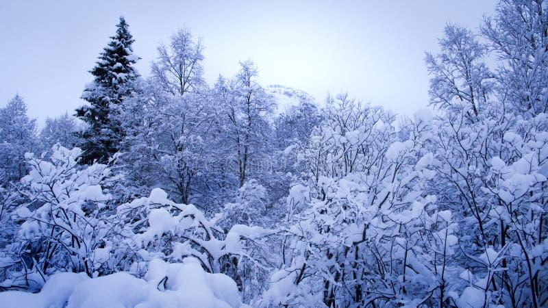 Träd som täckas med snö arkivfoto