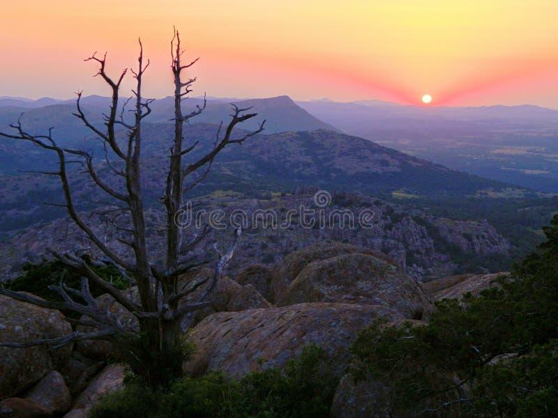 Träd som tycker om solnedgång royaltyfria bilder