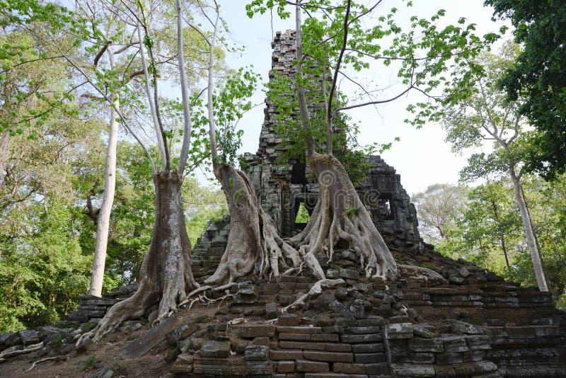 Träd som växer på moment av en liten tempel på Angkor Thom, en khmertempel, Siem Reap, Cambodja royaltyfri fotografi