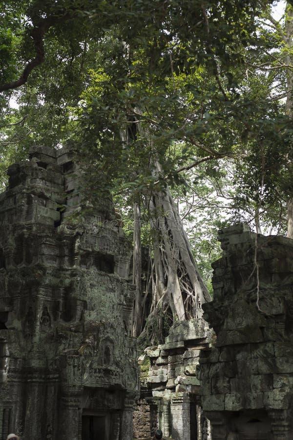 Träd som växer på väggarna av templet av Ta Prohm i Angkor arkivfoto