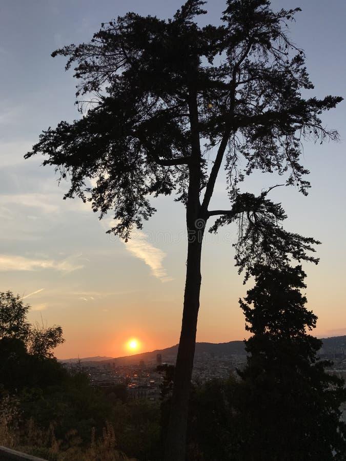 Träd stad, Montjuic berg, panoramautsikt, solnedgång royaltyfria bilder