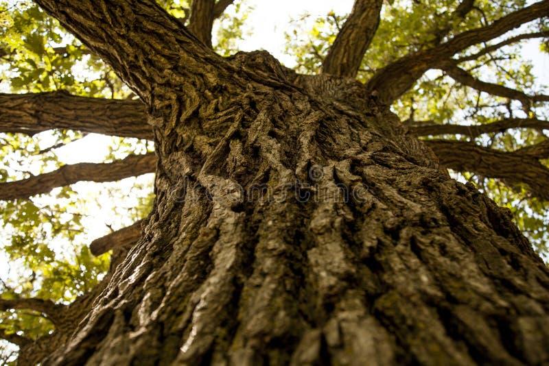 Träd-stam royaltyfri foto